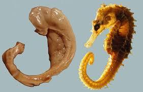 hippocampusanatomy
